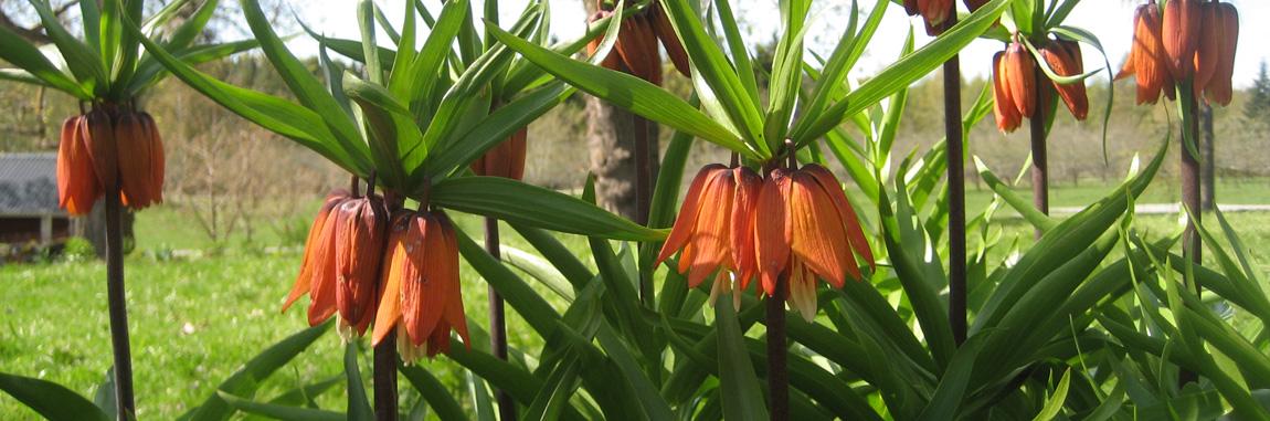 blommor.jpg